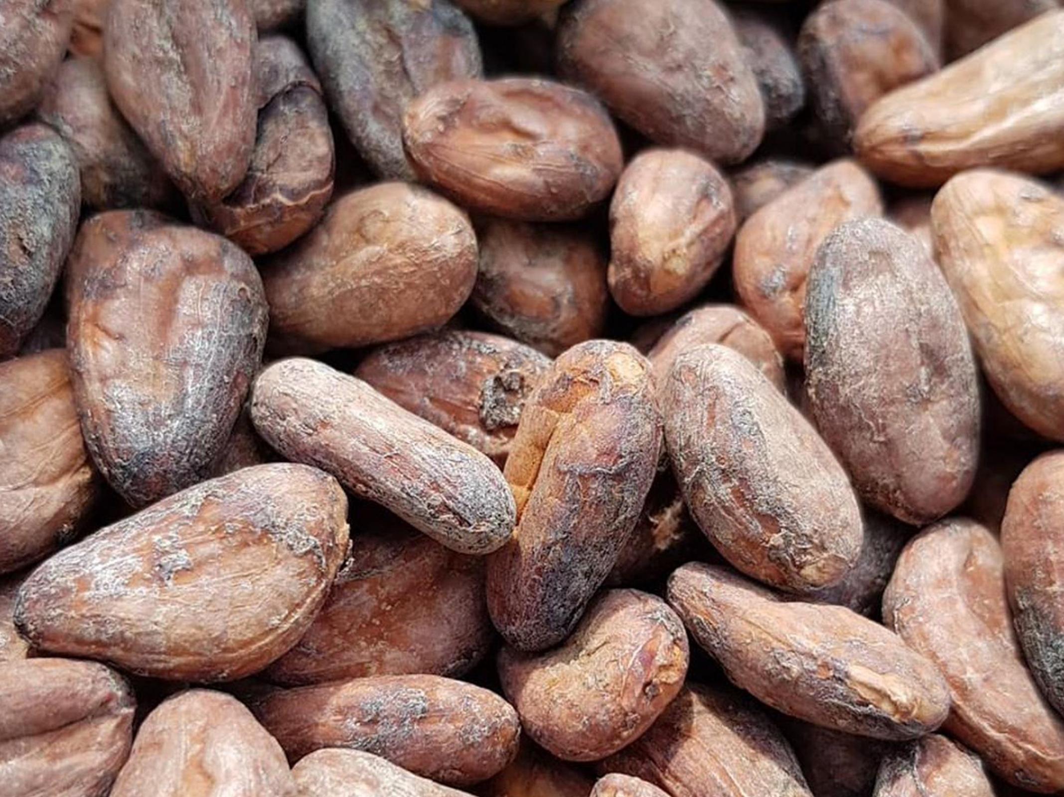 Fèves de cacao - Cocoa Valley - Marché des Producteurs - Les Trésoms Annecy