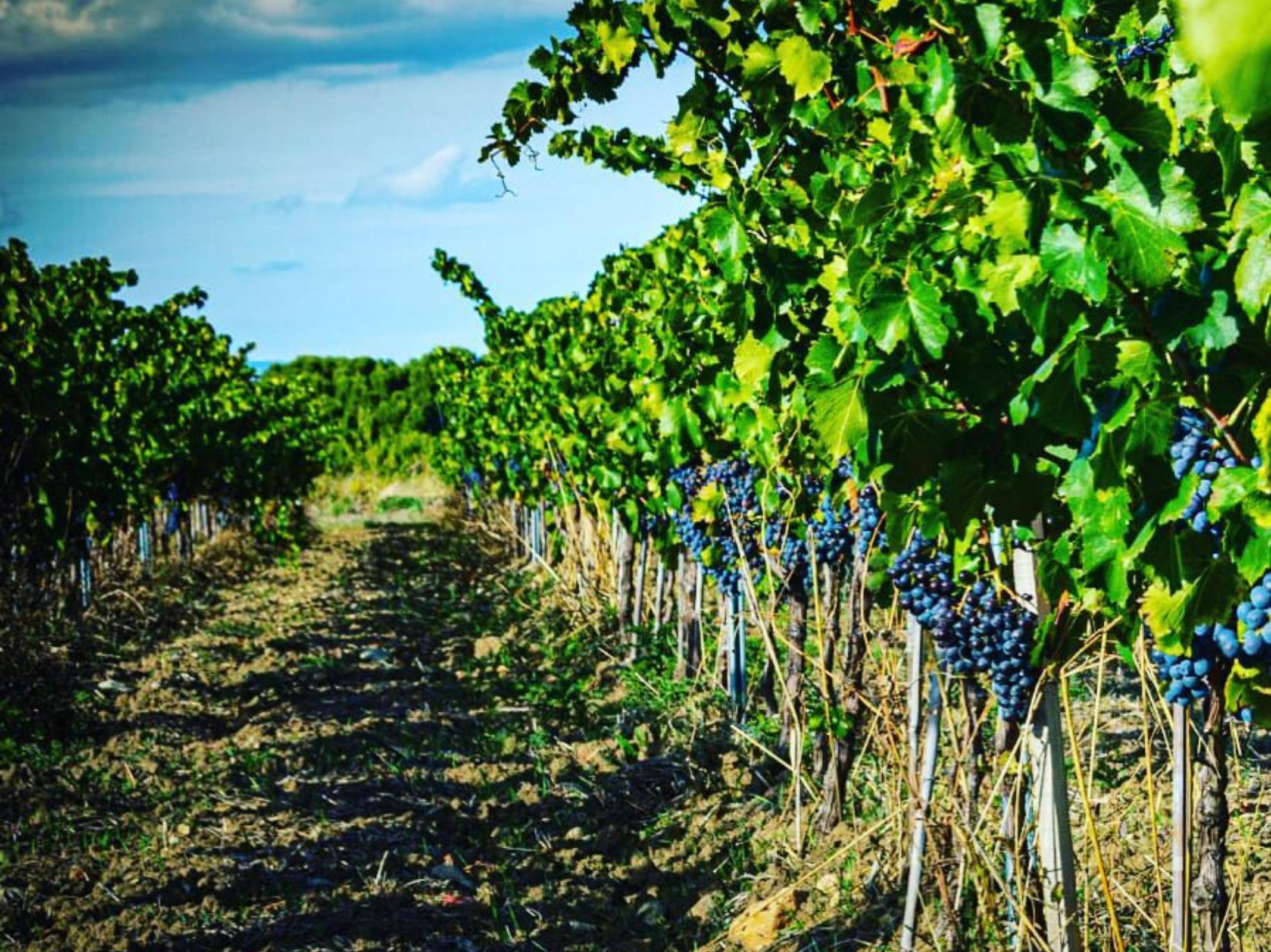 Vignes Famille Fabre - Marché des producteurs - Les Trésoms Annecy
